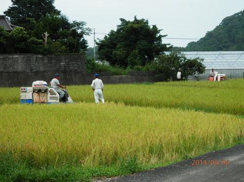 自宅前での稲刈の様子。H26,08,06撮影。