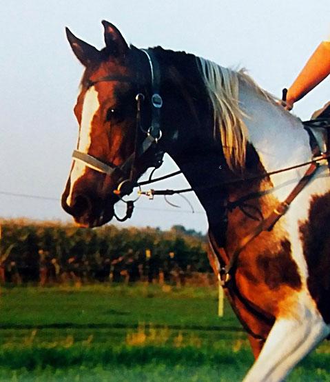 Tierkommunikation mit Pferd Lucy: Danke, Lucy, daß ich Dir begegnen durfte. Es war mir eine Ehre!