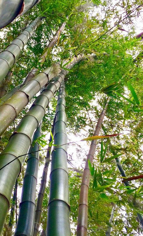 Erleuchtung macht dich biegsam wie ein Bambusrohr im Sommerwind