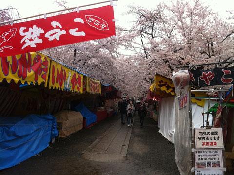 桜が満開の平野神社、午前中は人がまばらでした