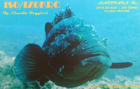 New Qsl ISO-2015