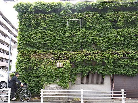 市内郊外の放置雑居建物