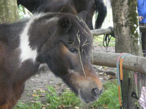 le poney retraité de 35 ans