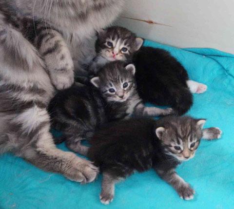 unsere Kitten sind jetzt 3 Wochen alt