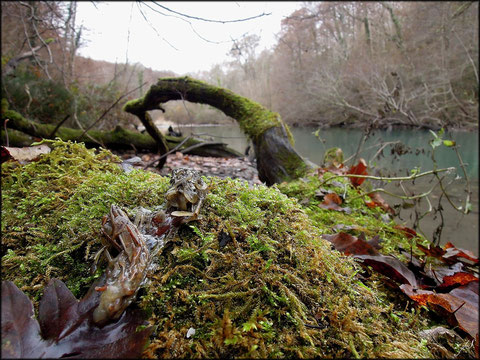 Samedi 24 novembre 2012  Gave d'Ossau - 64     Loutre d'Europe  (Lutra lutra)    Renard roux  (Vulpes vulpes)  Ecureuil roux  (Sciurus vulgaris)  Martre des Pins  (Martes martes) ©JLS