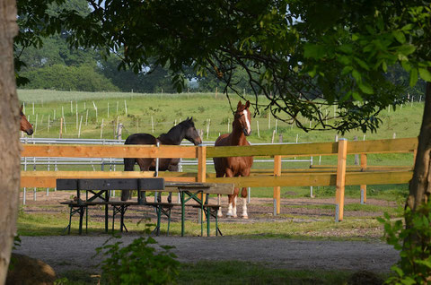 Große Paddocks für zufriedene Pferde