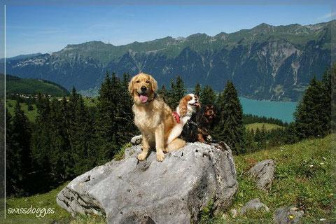 Auf dem Rückweg zur Axalp haben alle die wunderschöne Bergwelt genossen.