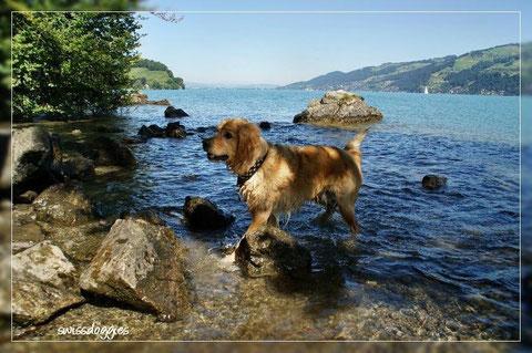 Roxy geniesst die Abkühlung im See