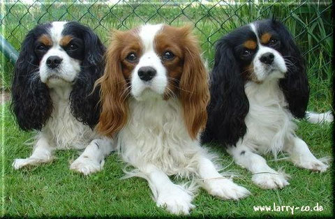 Buddy, Jimmy und Tommy