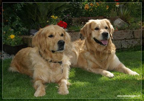 Roxy und Jive... haben sich durch's Internet kennengelernt ;-) dank dogspot