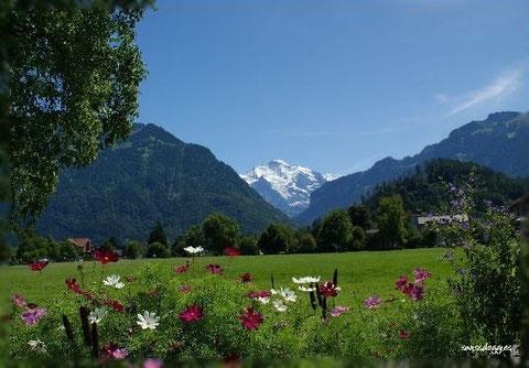 Blick in Interlaken auf die Jungfrau