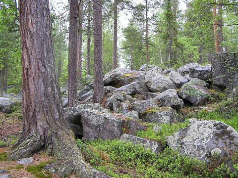 Wald der vielen Steine ...