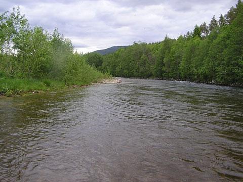 An der Rena bei +10 Grad C Wassertemperatur war die Fischerei schon etwas besser.
