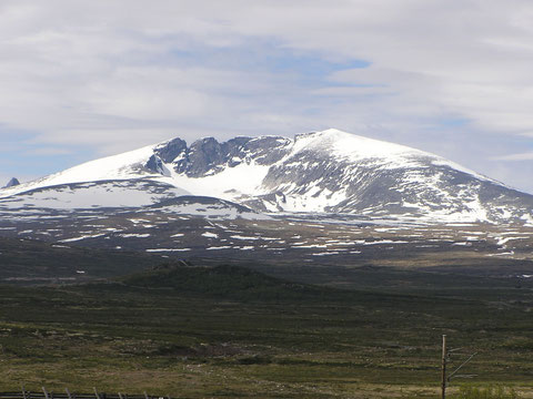 ... und im Dovrefjell Nationalpark. Die Moschusochsen hatten sich leider versteckt.