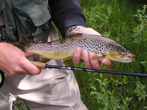 Wilde Fische in wildem Wasser.