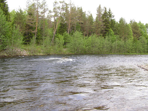 Die Unsetåa war leider mit +7 Grad C Wassertemperatur  noch zu kalt zum Fischen.