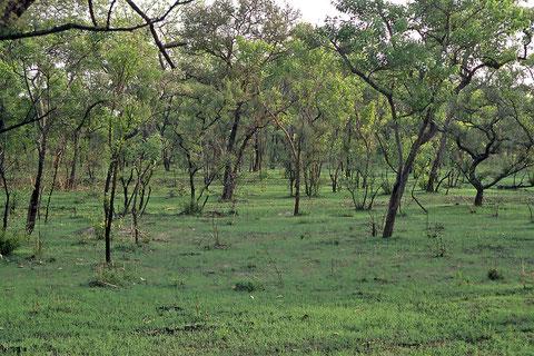 paysage de brousse après 2 jours de pluie