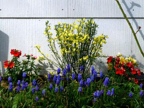 Der Frühling aus dem Gartencenter