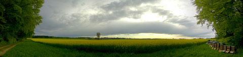 Rapsfeld und Bienenstöcke bei Großdingharting (Panorama - autostitch)