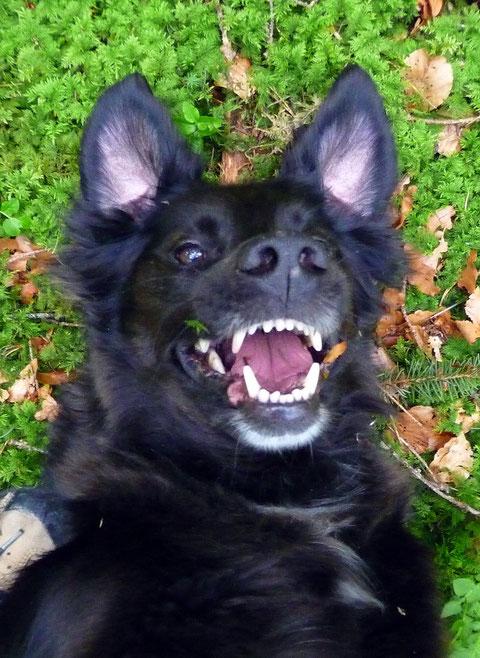 """Timi bei seinen Lieblingsbeschäftigungen: Wälzeln und """"Lachen"""" :-)"""