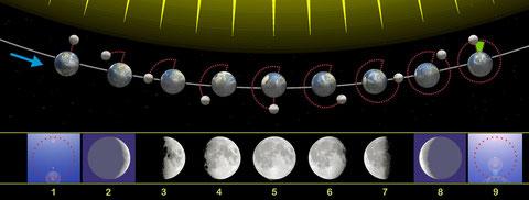 Mondphasen (wikipedia, Orion 8)
