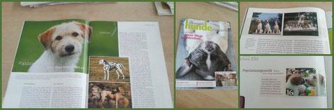 Diese Ausgabe des Schweizer Hundemagazines berichtet im Rahmen der Artikelserie zum Thema Populationsgenetik auch über das Einkreuzprojekt des VRK. Lesenswert!