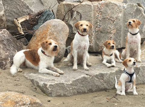 Fünf Freunde! Tuba, Wurzel, Flocke, Candis, Fluse