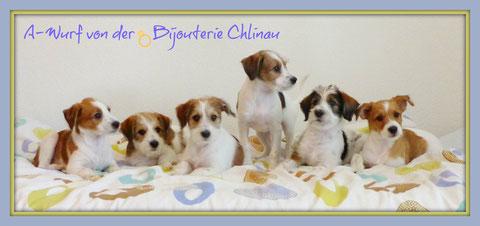 hier die sechs Bijou Töchter: Amy, Alma, Aki, Aiva, Arwen und Amélie
