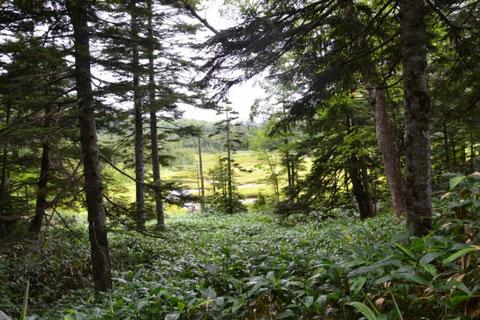 木の間から四十八池が望まれた