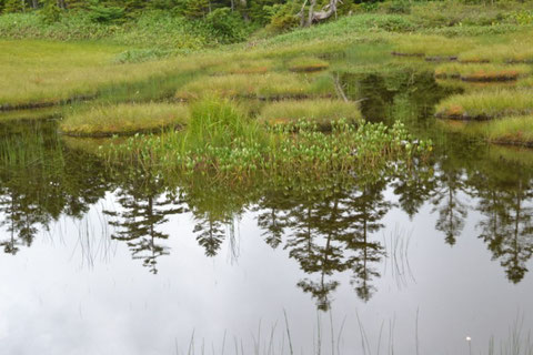四十八池とはこのように大小の池塘がたくさん集まっている