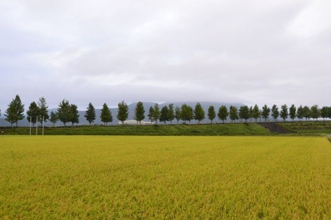 文殊山の上部は雲に覆われている となりの田んぼはとっくに刈り取られている