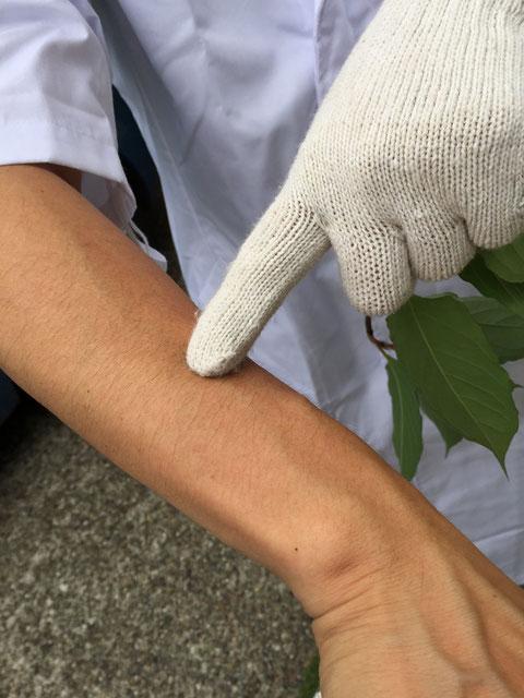 右腕のこの辺りに葉っぱを擦り付けてみます