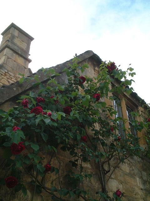 バラの奥深い赤色も蜂蜜色の外壁によく合う。贅沢な感じがしますね。