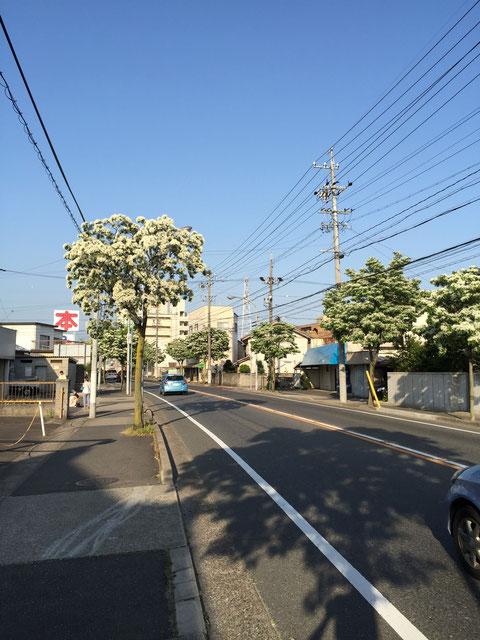 見慣れた風景も花が咲くと一変する やはり日本の五月は良い季節だ