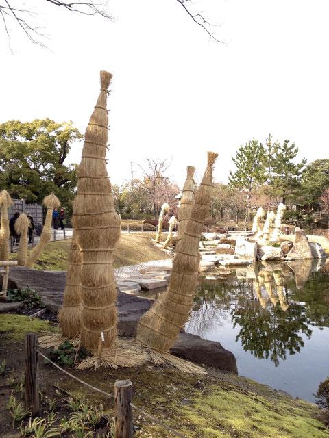 春間近の徳川園でソテツの冬養生の違いをみつけました