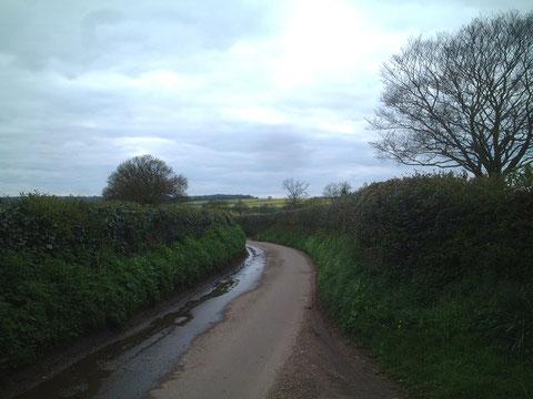 ブラックベリーやラズベリーを用いて作ってあるヘッジと呼ばれる生垣