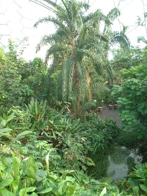 バイオームの中はジャングル。イギリスでジャングルに出会えるとは思わなかった。