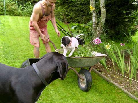 Harley und Buzz bei der Gartenarbeit