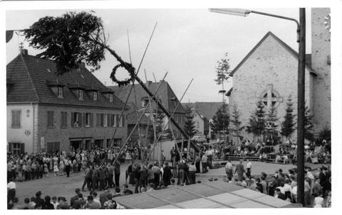 Aufrichten des Planbaumes (Privatfoto 1955)
