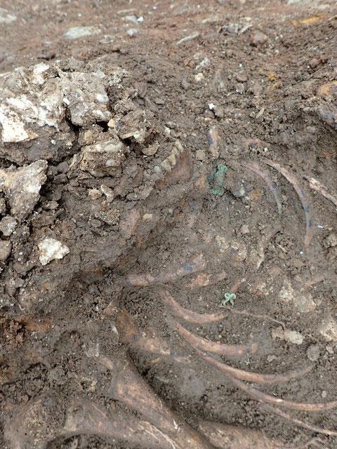 deutlich sichtbar, die Metallklammern und-ösen an der einstigen Kleidung des Toten