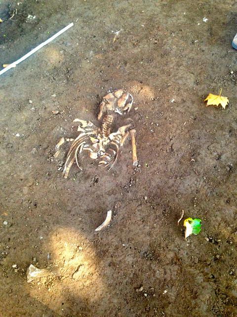 Diese Person wurde mit dem Gesicht nach unten beerdigt - ein Versehen?