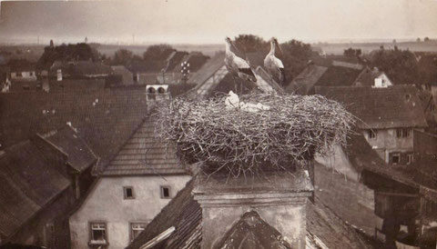 1926 - Storchennest über Geldersheim mit Blickrichtung Schweinfurt