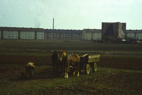 März 1960 - die letzten Landwirte sind dort unterwegs