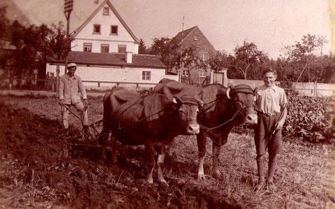 Blick zur Mühle mit Ochsengespann