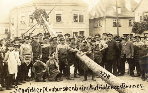 Die Sennfelder Planburschen beim Aufrichten des Planbaums 1920. Im Hintergrund Kolonialwarenhandlung Albrecht Barth.