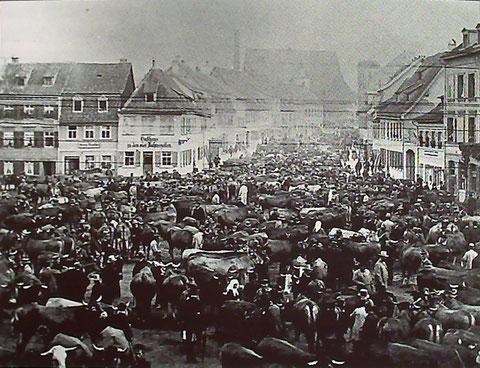 Viehmarkt auf dem Roßmarkt