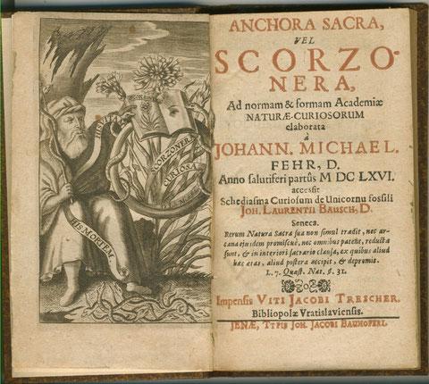 Anchora Sacra vel Scorzonera