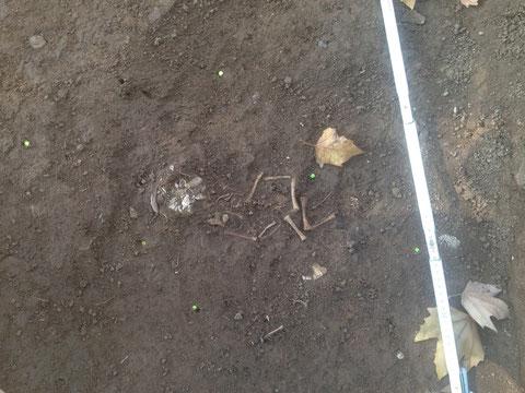 """Skelett eines Kleinkindes im Bereich angrenzend an die Straße """"Am Zeughaus"""""""