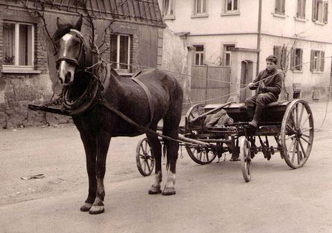 Pferd mit Wagen und jungem Röthleiner