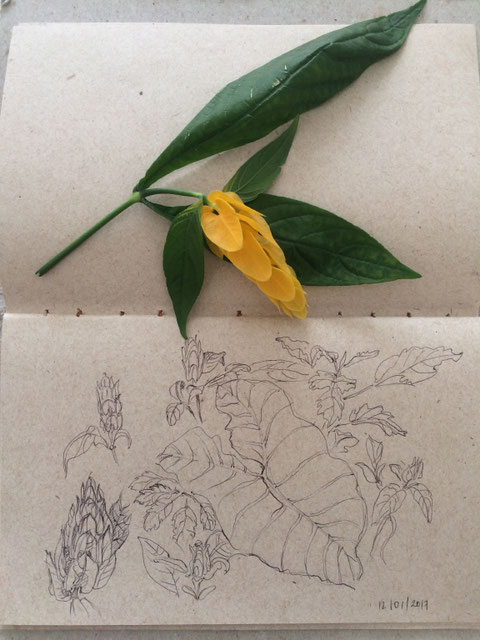 """""""Pflanze 1 - 3"""" Kugelschreiber auf Papier, 15 x 21 cm, Ronni Zettner 2017"""